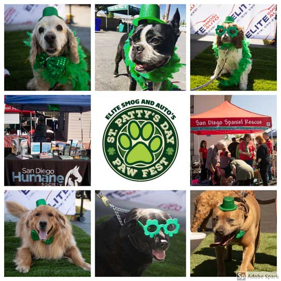St. Pattys Day Paw Fest